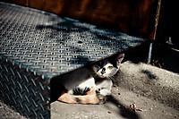 Kim_olson_stray_cat_tokyo_japan_365